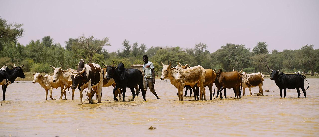 El pastoreo: un estilo de vida resiliente frente a numerosos desafíos