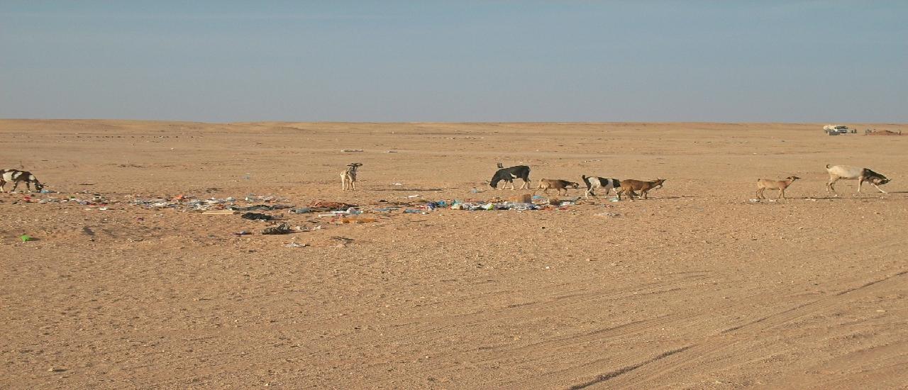 campamentos refugiados saharauis